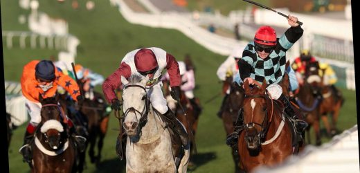 Cheltenham races: tips, racecards and previews for Sunday's card at the November Meeting