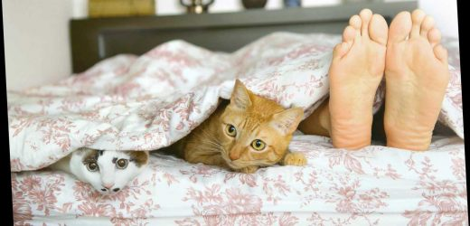Millions of pet owners like to sleep with their furry pals – as they feel safer