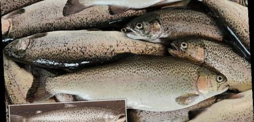 Angling experts want to DNA test 28lb 5oz British record sea trout