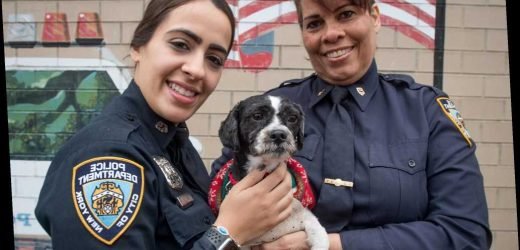 Bronx cop saves abandoned dog found on the job