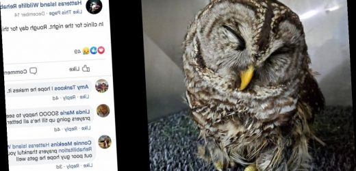 Owl takes 3-hour ride to Outer Banks, North Carolina, in car's grille and survives