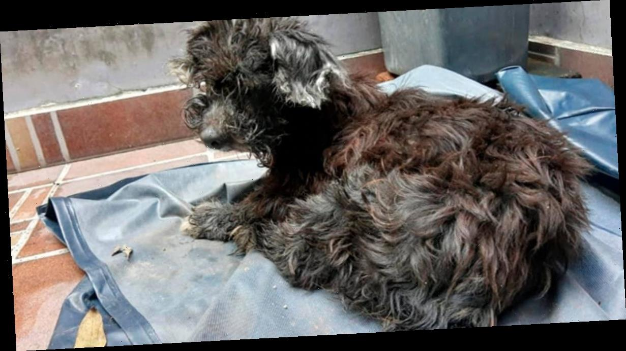 Dog dumped in sewer with eyes glued shut 'so she couldn't follow owner home'