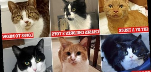 Can you help Britain's 13 'most unwanted' cats?