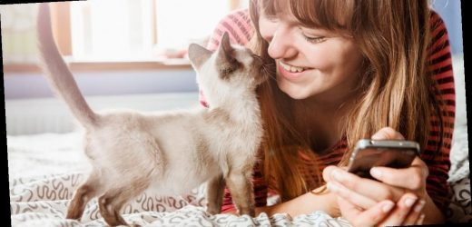 A study has found that cats actually adopt their owner's personality traits