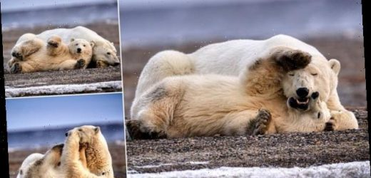 Unbearably cute! Polar bear cub playfights with its patient mother