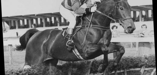 Number 17: The legendary Festival hurdler that downed Sea Pigeon & Monksfield in the 'best ever' Champion Hurdle