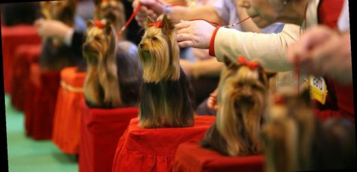 Crufts dog show returns for its 129th year with one-of-a-kind celebrations