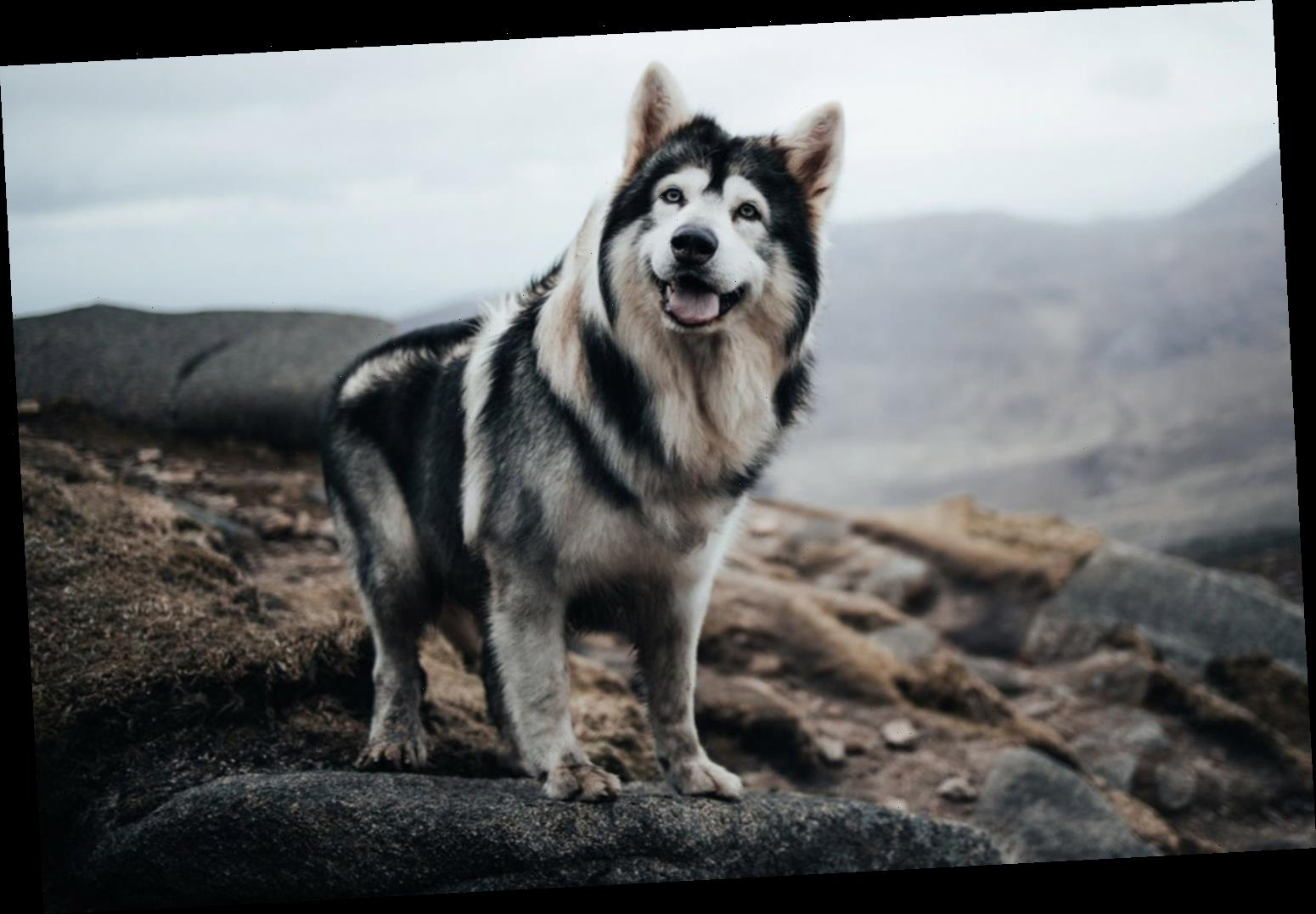 Dog Who Played Bran Stark's Direwolf in Game of Thrones Dies from Cancer