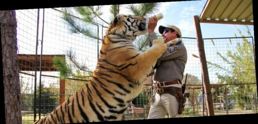 Who Should Star in the Inevitable 'Tiger King' Movie?