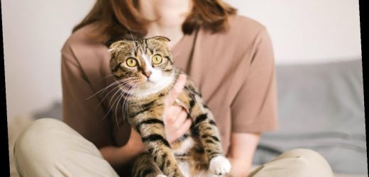 Two Pet Cats Have Tested Positive For Coronavirus