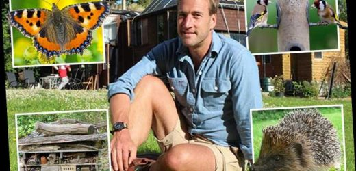Ben Fogle's guide on how to explore nature while staying safe at home during coronavirus lockdown – The Sun