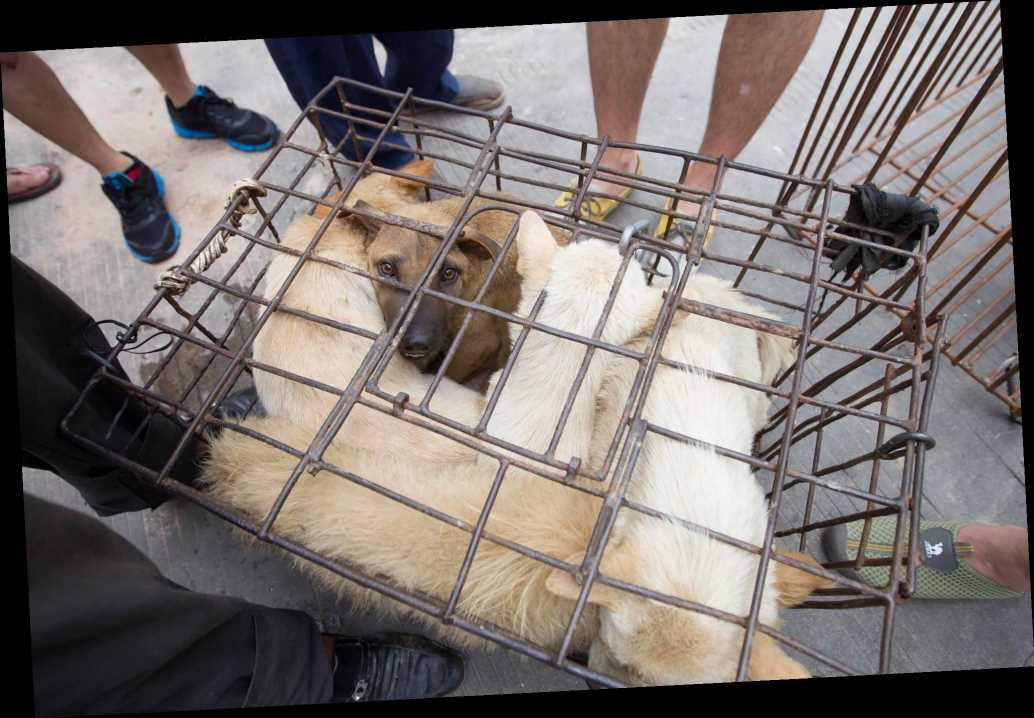 China Will No Longer Classify Dogs as Livestock, Marking Push Toward Dog Meat Ban: Reports