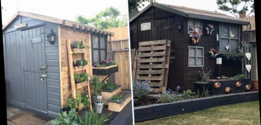 Family revamp their entire garden for FREE by using pallets to transform their fence, shed AND pot plants
