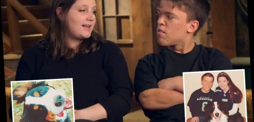 What happened to Zach and Tori Roloff's dog Sully?