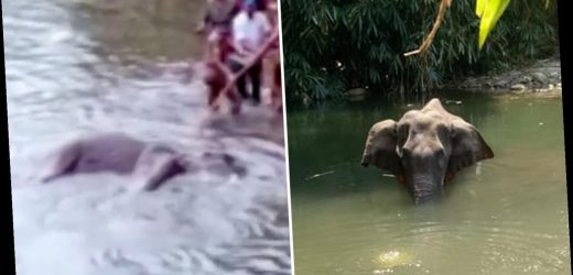 Pregnant wild elephant killed by pranksters who hid firecrackers inside pineapple in India Kerala's forest – The Sun