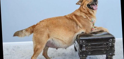 Oh Mama! Shelter Rescues Three Pregnant Dogs and Gives Each One Their Own Maternity Shoot