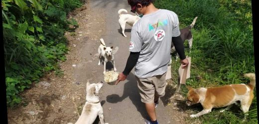 Animal Welfare Group Feeds Stray Animals in Bali After Decline in Tourism Leaves Them Hungry