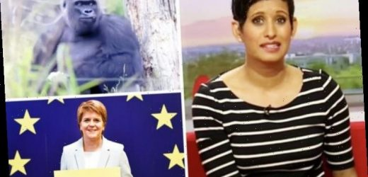 Naga Munchetty: Shock gorilla snub to Nicola Sturgeon on BBC Breakfast exposed