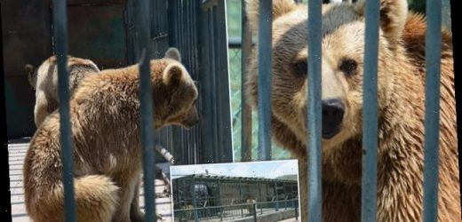 Three bears face more suffering in Armenian holiday complex