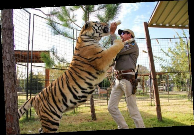 Some People Don't Like Netflix's 'Tiger King' — Here's Why
