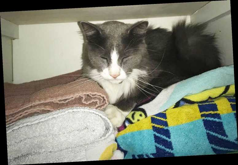 'Kleptomaniac' Kitty Caught Stealing Neighbors' Clean Laundry, Bathing Suits, Socks and More