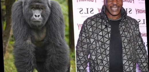Mike Tyson once offered zoo keeper £9,000 to fight a silverback gorilla in a cage on night out with ex-wife Robin Givens – The Sun