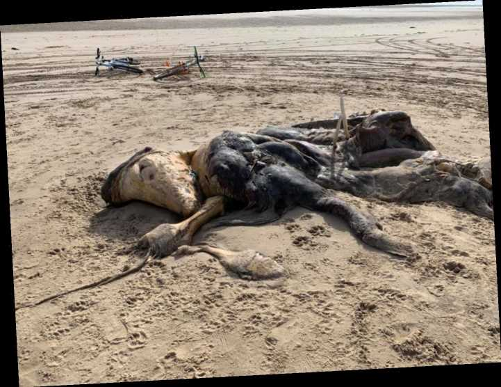 Mystery as 15ft 'smelly' creature 'washes up on beach'