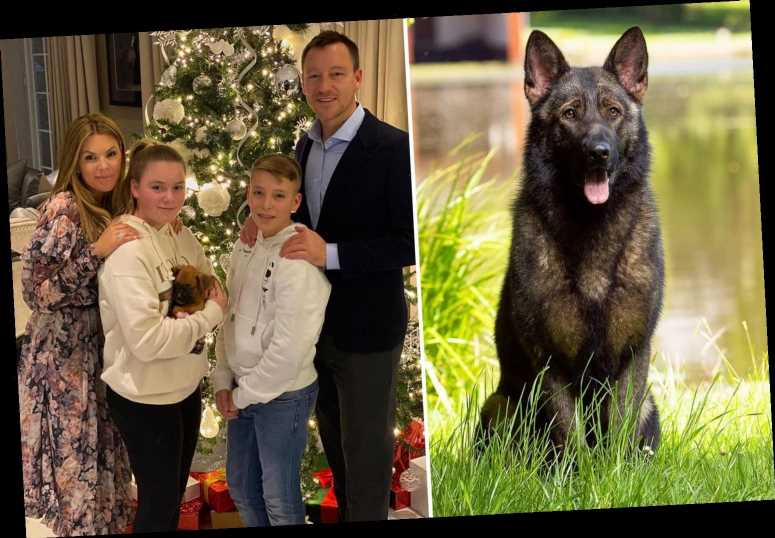 Chelsea legend John Terry splashes out on fierce protection dog after 'traumatising' £400,000 raid on Surrey mansion