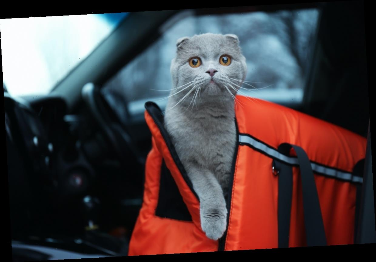 Stressed Kitty? These Durable Carriers Make Traveling With A Scared Cat So Much Easier