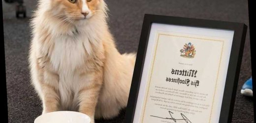 Local Celebrity Mittens the Cat Is in the Running for New Zealander of the Year