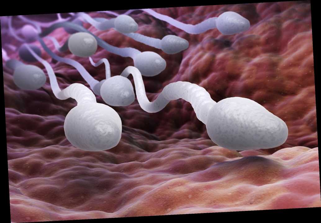Women's bodies can weed out 'unwanted' sperm, study finds
