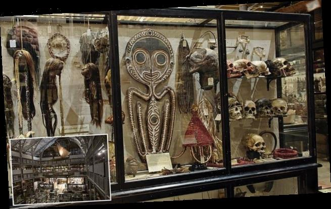 Oxford museum removes shrunken heads made by Amazon headhunting tribe