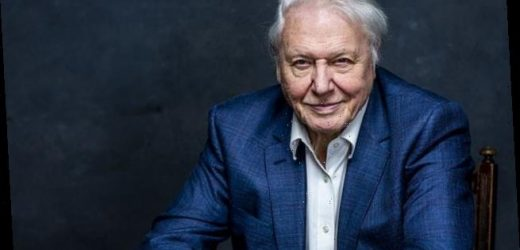 I'm a middle-class hypocrite: David Attenborough admits eating meat