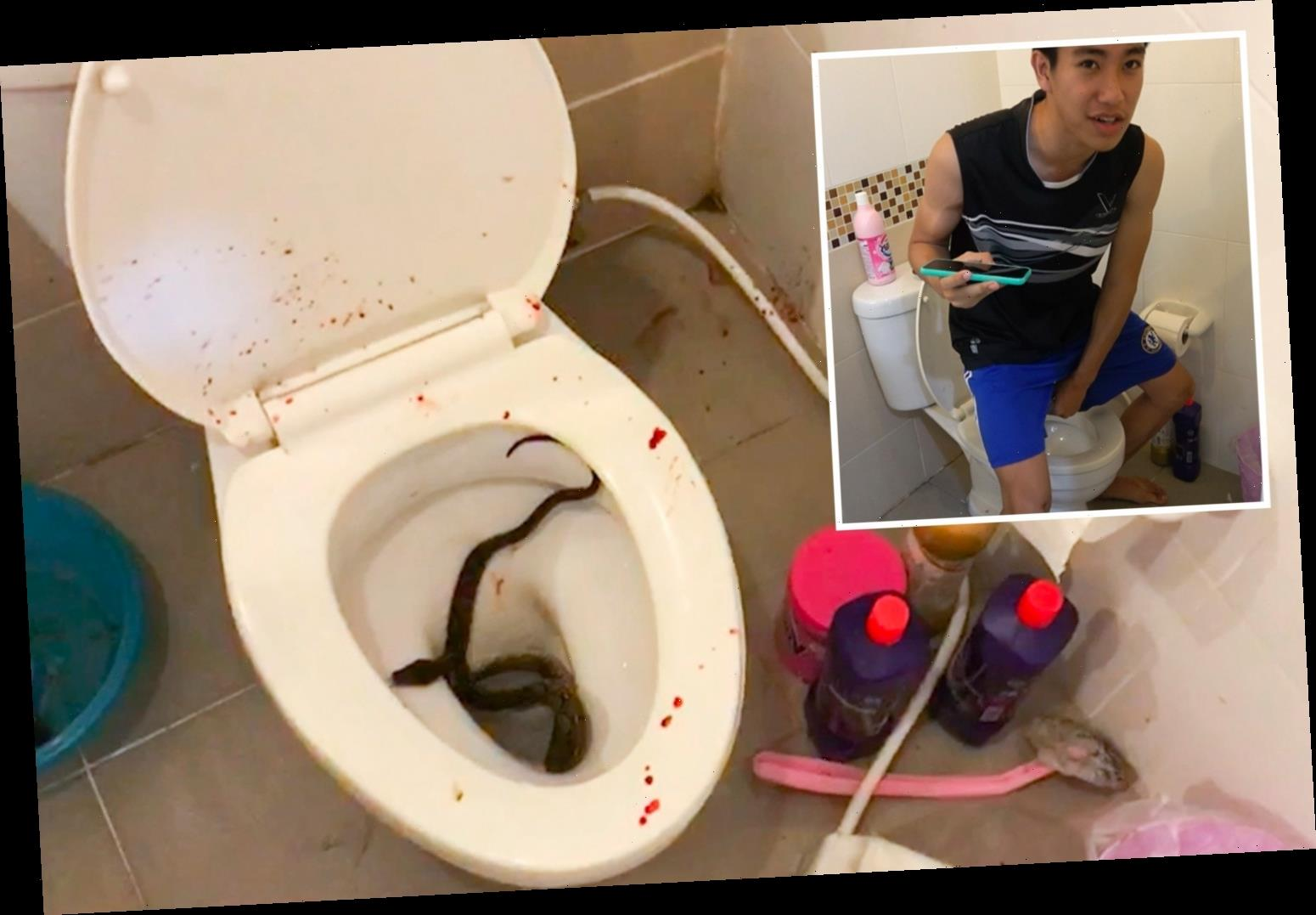 Teen rushed to hospital after 4ft python bit his PENIS as he sat on the toilet leaving 'blood spurting everywhere'