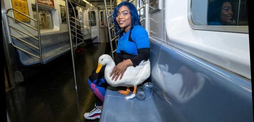 New Yorkers gasp as woman walks streets, rides subway with pet duck