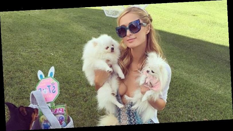 Celebrity Pets That Have Their Own Social Media Accounts