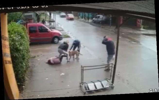 Mother fights off pitbull as it bites her daughter, 7, in Buenos Aires