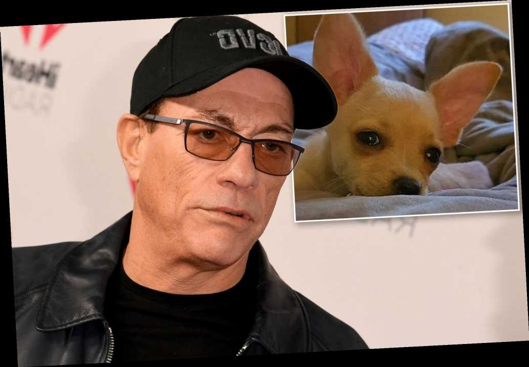 Jean-Claude Van Damme saves dog's life after passport dispute