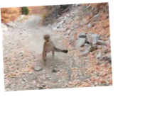 Cougar follows and lunges at Utah hiker in terrifying six-minute video