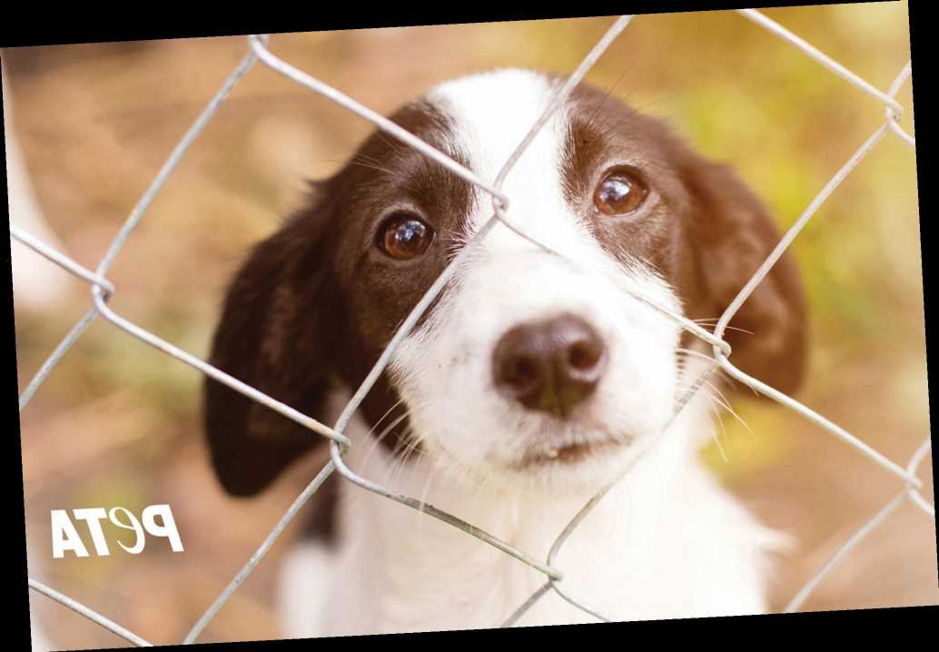 PETA calls out celebrities who buy pets instead of adopting