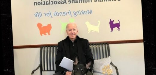 Joe Biden Twists His Ankle Playing with Dog, To Be Examined by Doctor