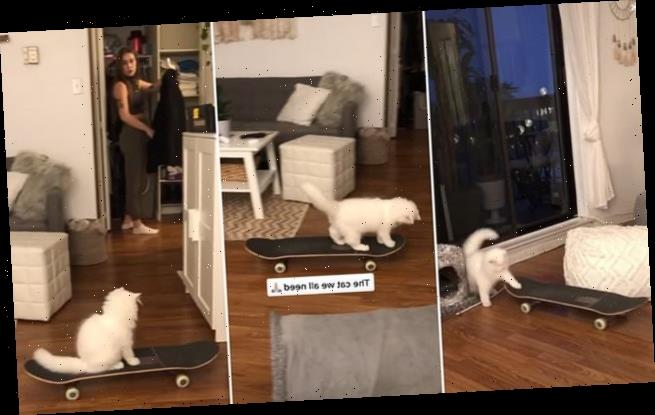 Himalayan cat wins army of fans for its paw-some skateboarding skills