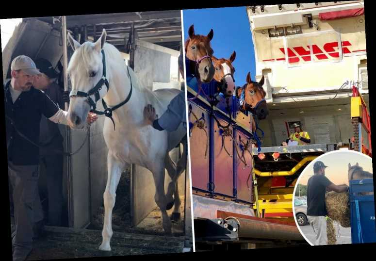 Amazing photos reveal how horses travel thousands of miles by air, with luxury £50m stalls and personal handlers
