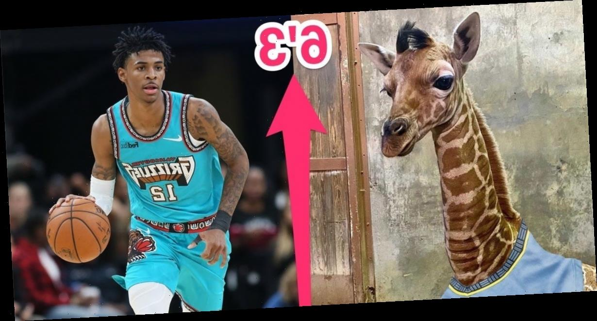 The Memphis Zoo named its baby giraffe 'Ja Raffe' in honor of Grizzlies star Ja Morant, and the star NBA player was pumped