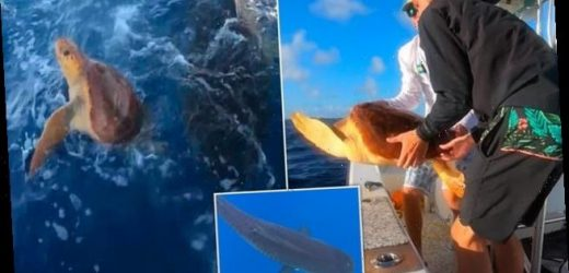 Fishermen rescue turtle from the razor sharp jaws of a tiger shark