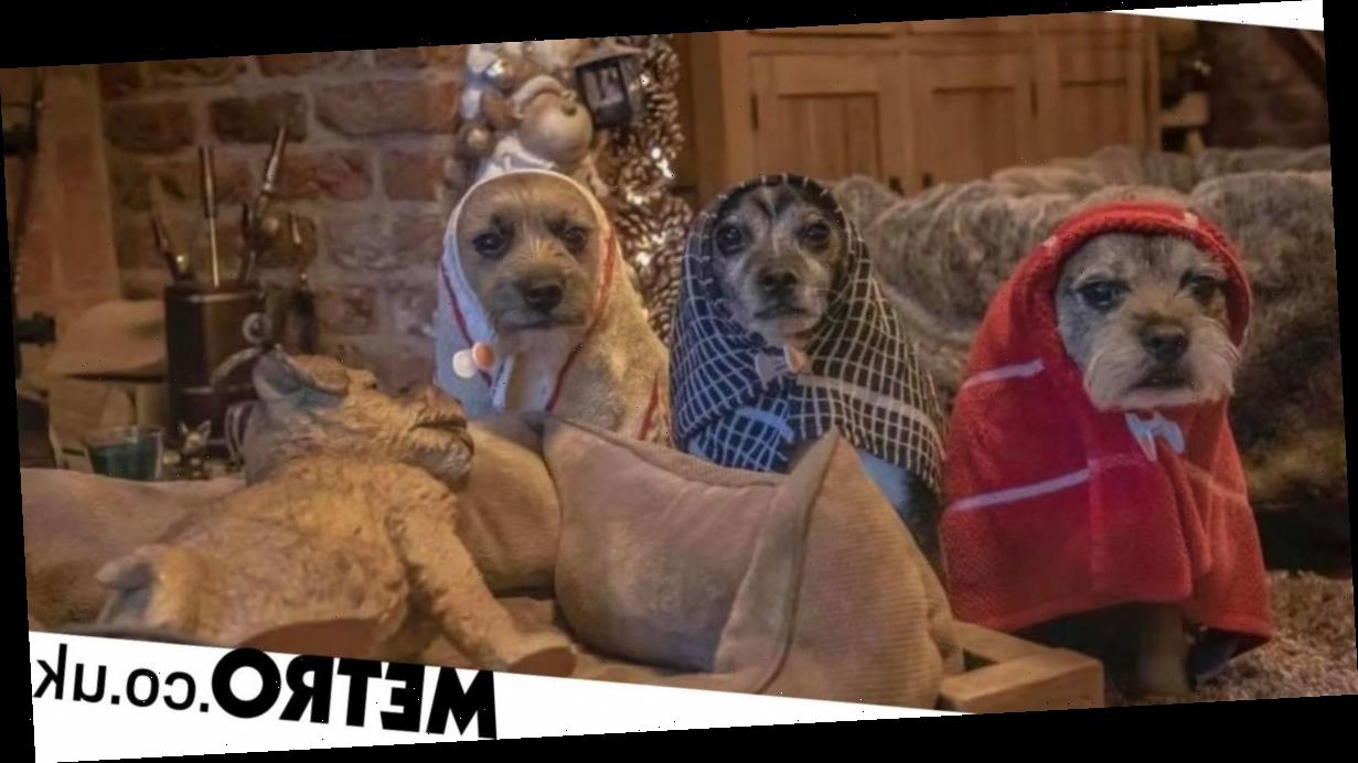 Dogs pose for brilliant nativity scene to spread Christmas cheer