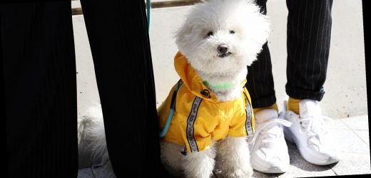 12 Dog Sweaters That Have Human Counterparts So You Can Match Your Pet