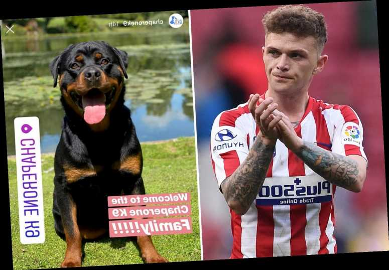 England star Kieran Trippier buys £20,000 guard dog to protect his home from raiders after spate of thefts