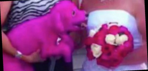 Woman defends dyeing dog's fur pink saying 'it makes her so happy'