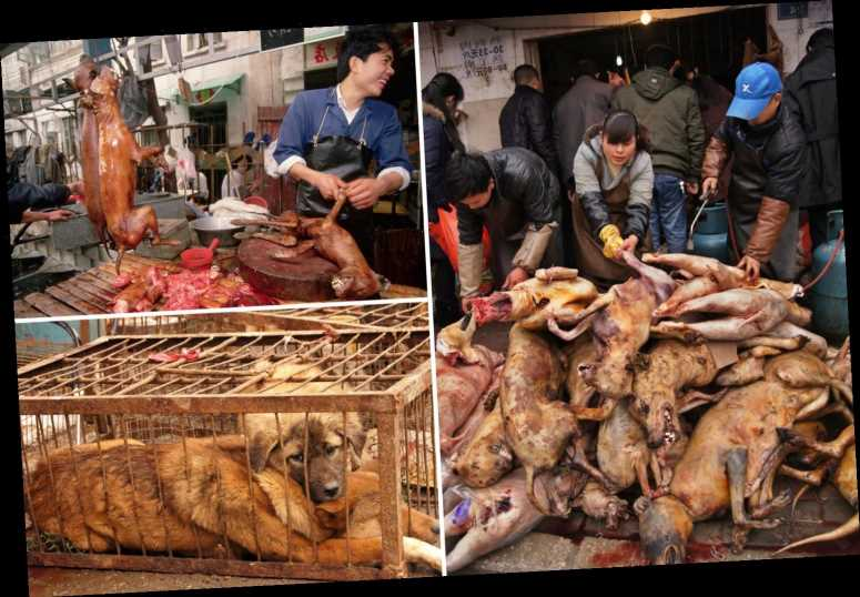 Inside China's brutal dog meat trade where live dogs have legs hacked off and are blowtorched to make snacks – The Sun